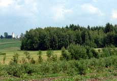 Foto Heidelbeerland Sturm in Summerau bei Rainbach/Mkr.